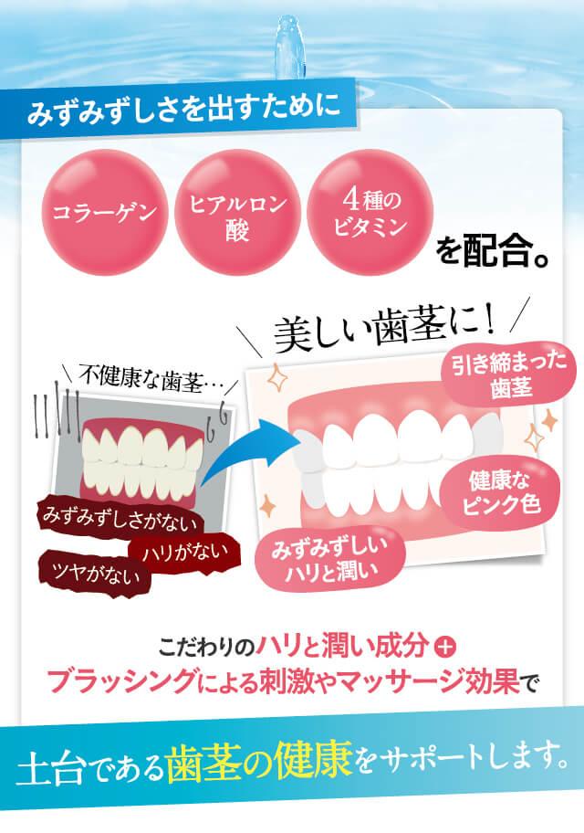 歯ぐきの健康をサポート